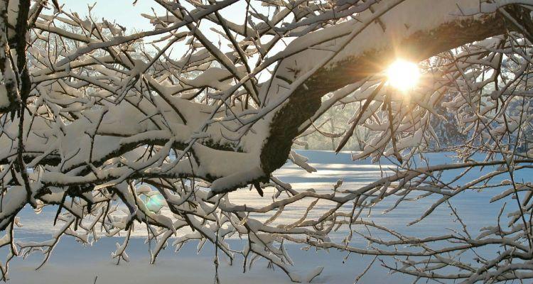 schneelast-baum